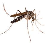 Artikli, ki nas bodo varovali pred komarjem, klopom, osam in drugimi nadlogami.